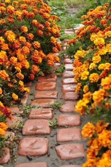 A Path Through The Golden Marigolds.