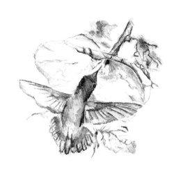 A Hummingbird Pollinating a Flower.