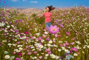 Girl running in a huge field of Cosmos Flowers.