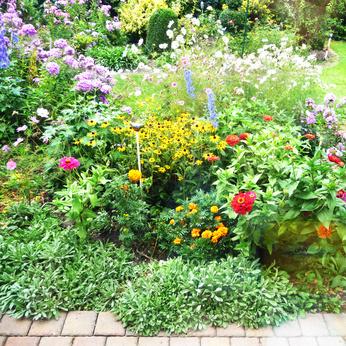 Perennial Flower Garden.