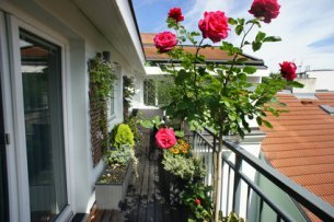 Red Standard Rose On Balcony.