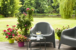 Afternoon Tea Setting On Verandah With Container Roses.