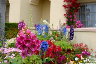 Beautiful garden of annual plants.