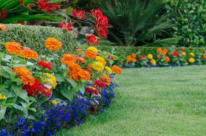 Bright Annual Garden. Crocosmia, Zinnias and Lobelia.
