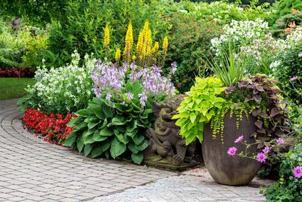 Summer Perennial Garden.