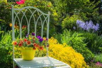 Garden With Bright Showy Perennials and Petunias.