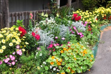 Annual Plants with Perennials in Summer Garden.