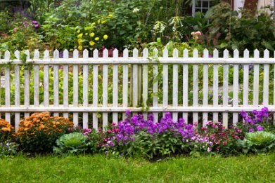 Perennial Garden Inside And Outside The Fence.