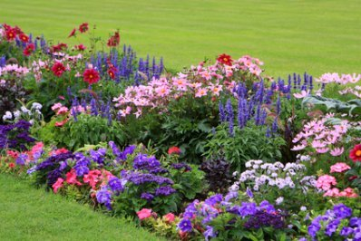 The Mixed Beauty of Spring flowers in a Garden Bed.