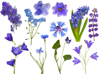 Blue Monocot and Dicot Types of Flowers.