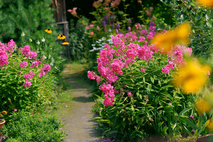 A Path Through The Perennial Flowers.