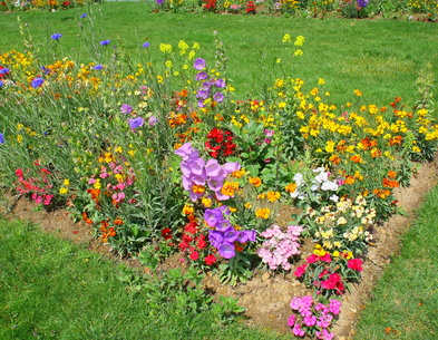A Small Bed of Spring Flowers.