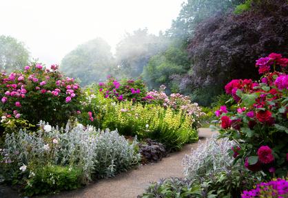 Morning Mist In The Perfect Perennial Flower Garden