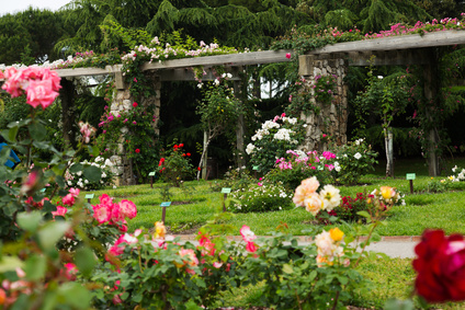 Garden With Different Types of Roses.