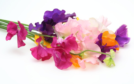 A Bouquet of Sweet Peas in Pink, Purple and Yellow.