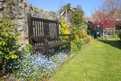 Blue Forget Me Not Flowers Beside A Garden Bench.