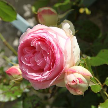 Closeup of Pierre de Ronsard.
