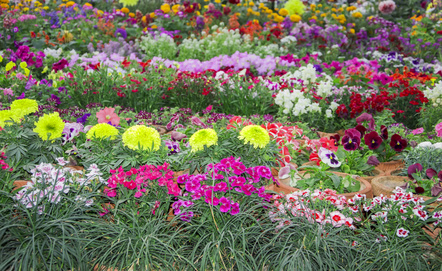 Beautiful Annuals And Perennials To Choose From.