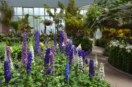 Blue, White and Pink Foxgloves.